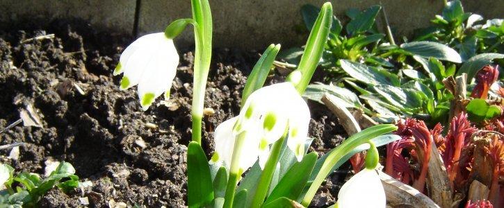 Jaro přichází ...