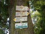 Lesem na Dubový vrch - rozcestník turistických značek na kmeni stromu