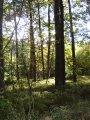 Rozhledna v obci Radětice a přírodní park Plziny